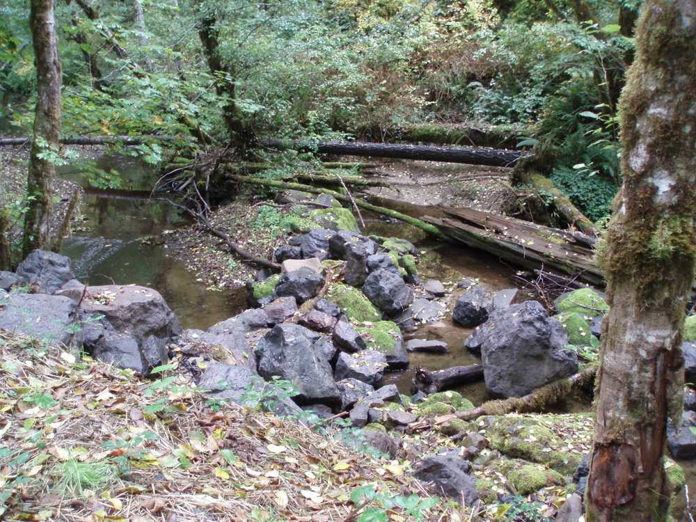 paradise creek 5.jpg