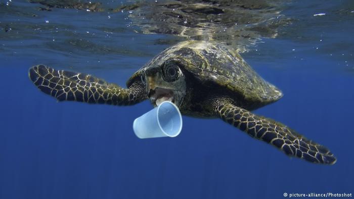 Tortuga y basura en el mar.jpg