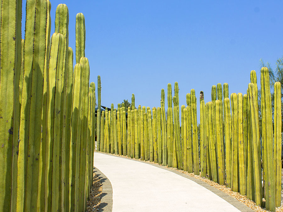 jardines-de-mexico.jpg