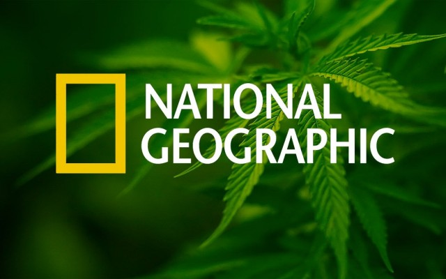 National-Geographic-Dedicates-Cover-to-Cannabis-Weedist-640x400.jpg