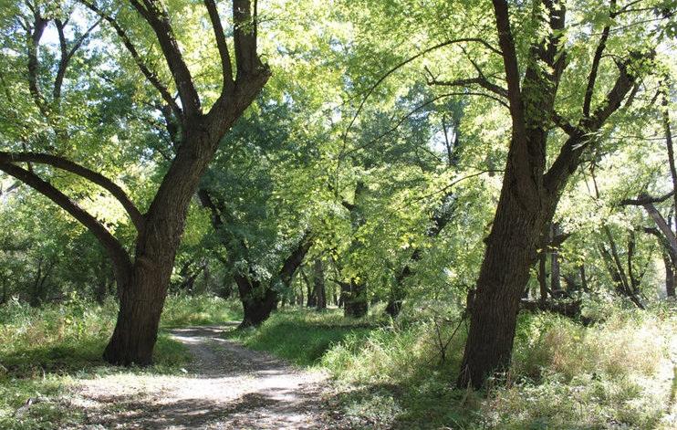 Trails%2BCampground%2BAkron.jpg