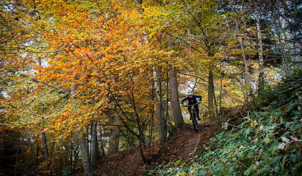 tweed valley images-4.jpg