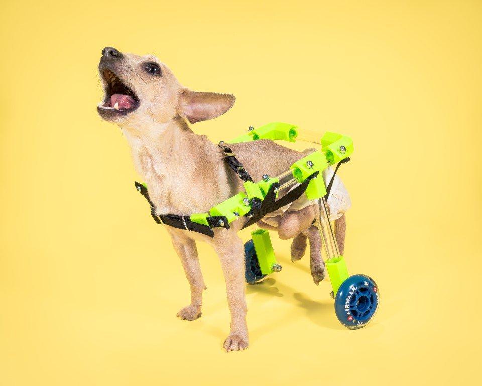 3D Printed Dog Wheelchair