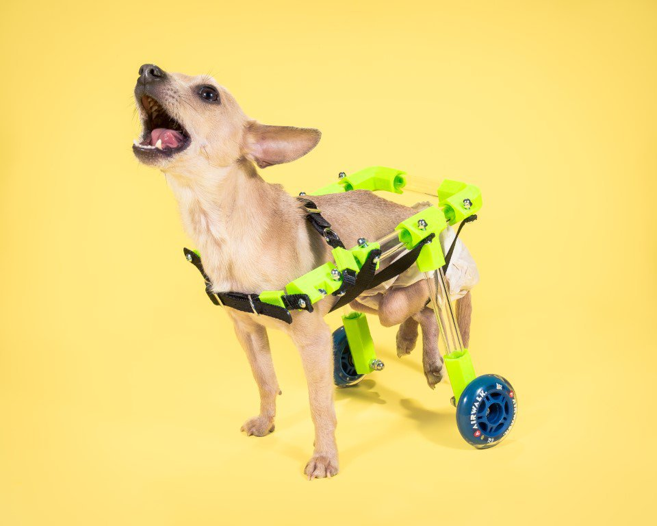 3D Printed Dog Wheelchair