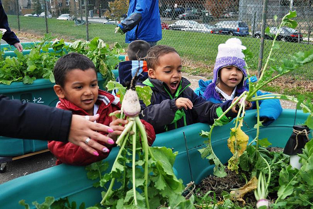 Digging In: DC's Garden and Food Access Movement Looks Ahead, Kojo Nnamdi Show, WAMU