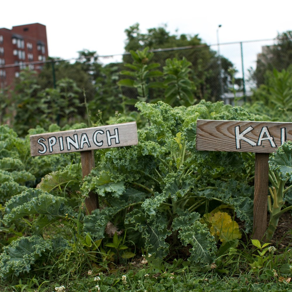An Urban Farming Renaissance in Our Nation's Capital, Civil Eats