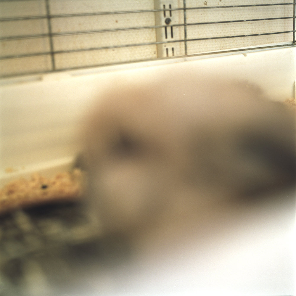It Must Have Been Love/I Didn't Loose it Anyhow  (2004) C-print, 60 x 60 cm.