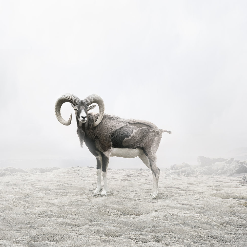 Reflecting Ram