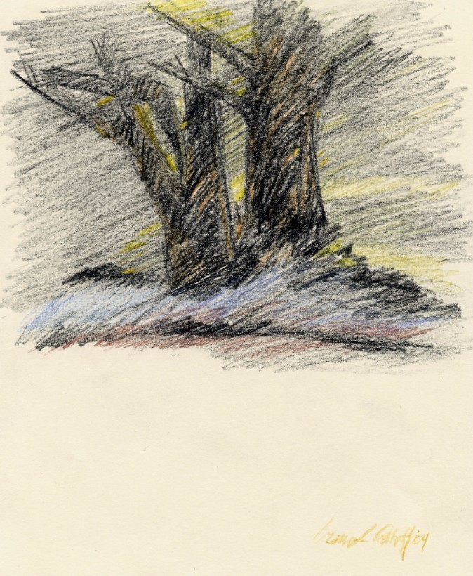 "BLACK TREES ... colored pencil  12""x9"""