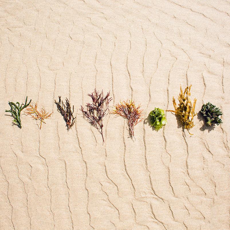 nwf-square-algae.jpg