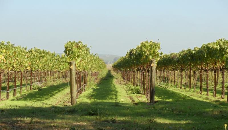 orchard photo.jpg