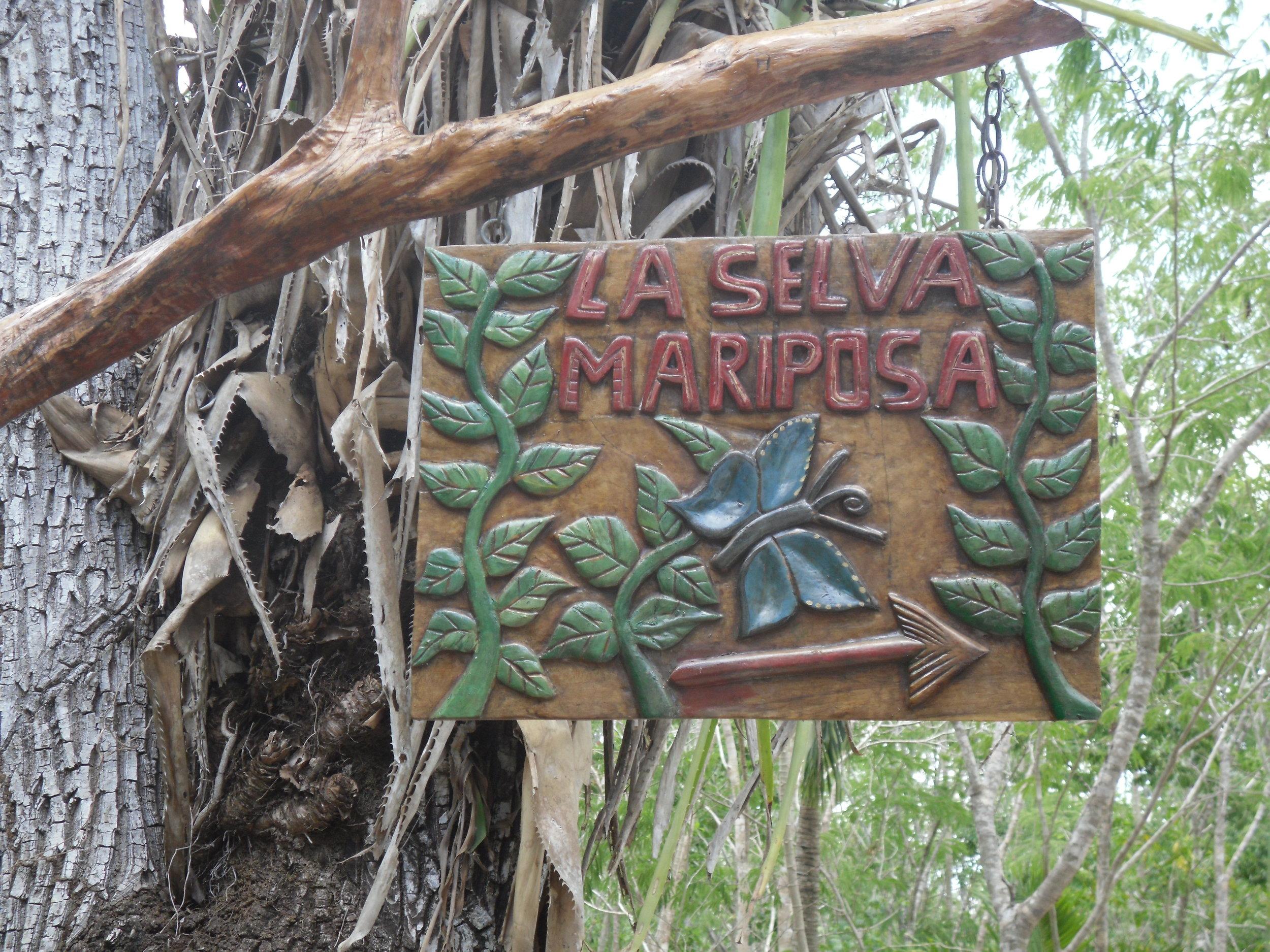 la-selva-mariposa