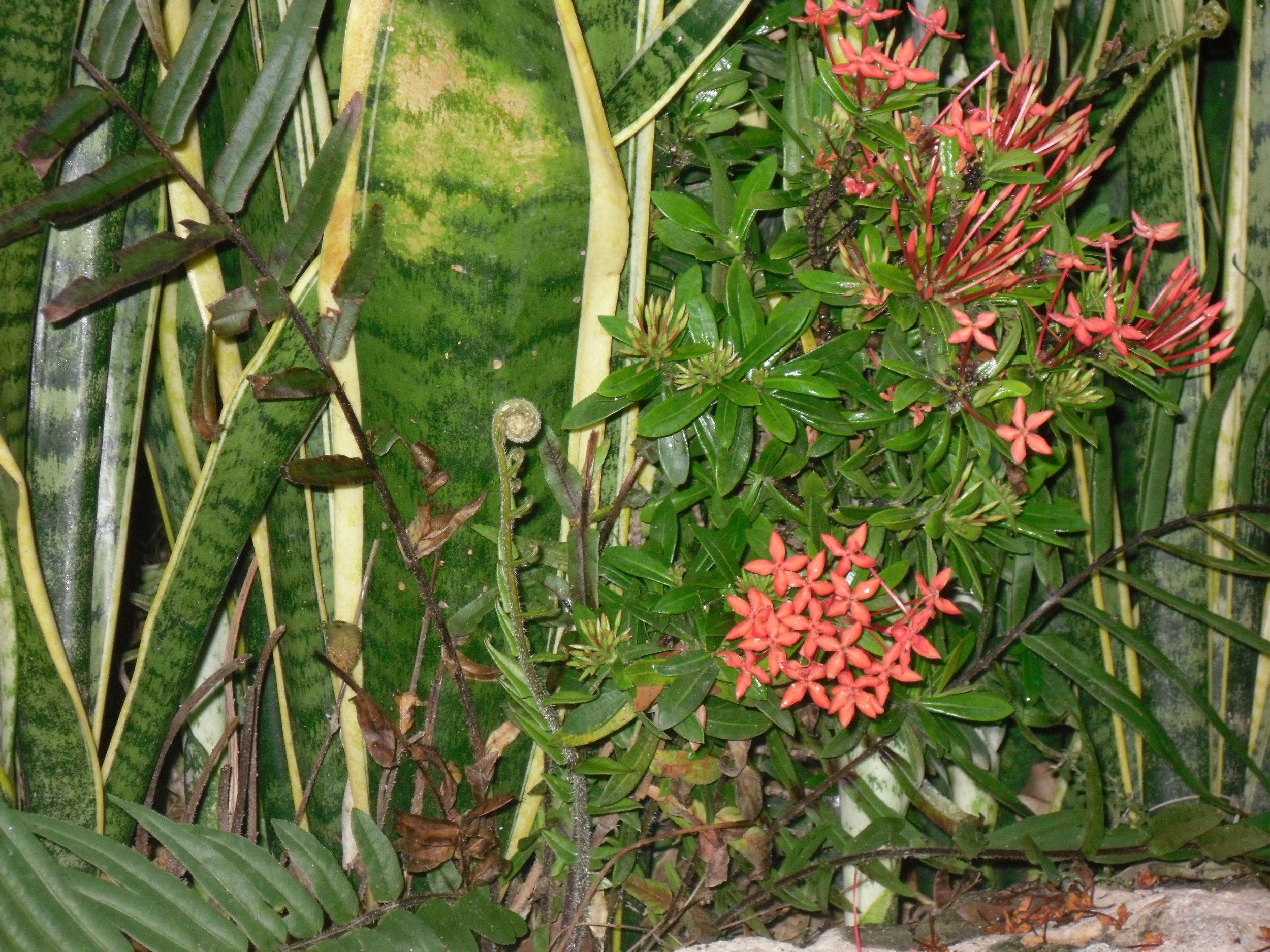 laselva-poolflora
