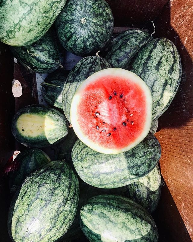 Invest in your health 🍉 Shop, eat, and support local farmers. . . . . . . . . . . #local #organic #nongmo #summer #watermelon #health #wellness #juicy #fresh #yum #hydrate