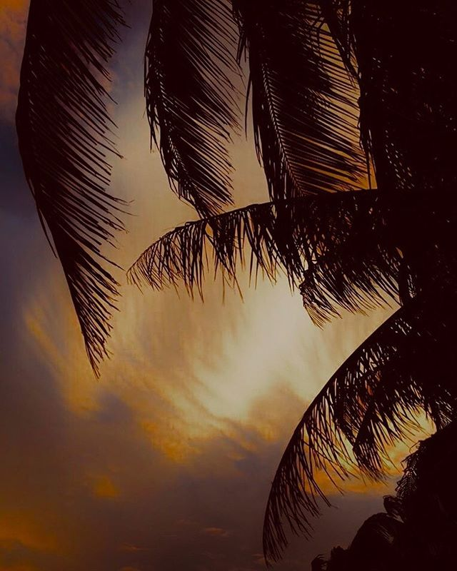 Gotta love a 🌴 ⠀⠀⠀⠀⠀⠀⠀⠀⠀ ⠀⠀⠀⠀⠀⠀⠀⠀⠀ regram via @dream_cabanas⠀⠀⠀⠀⠀⠀⠀⠀⠀ Love it when I find a like minded instagram account on the other side of the planet ....! ⠀⠀⠀⠀⠀⠀⠀⠀⠀ Have a nice evening in Caye Caulker ! Dream Cabanas#palm #cayecaulker #belize #sunset_pics #emotions #islands #adventure⠀⠀⠀⠀⠀⠀⠀⠀⠀ ⠀⠀⠀⠀⠀⠀⠀⠀⠀ #minimalism #minimalist #minimal  #minimalistic #minimalistics #minimalove #minimalobsession #minimalninja #instaminim #minimalisbd #simple #simplicity #keepitsimple #minimalplanet #minimalhunter #minimalista #minimalismo  #art #lessismore #simpleandpure #negativespace #keepitsimple #simplestupid