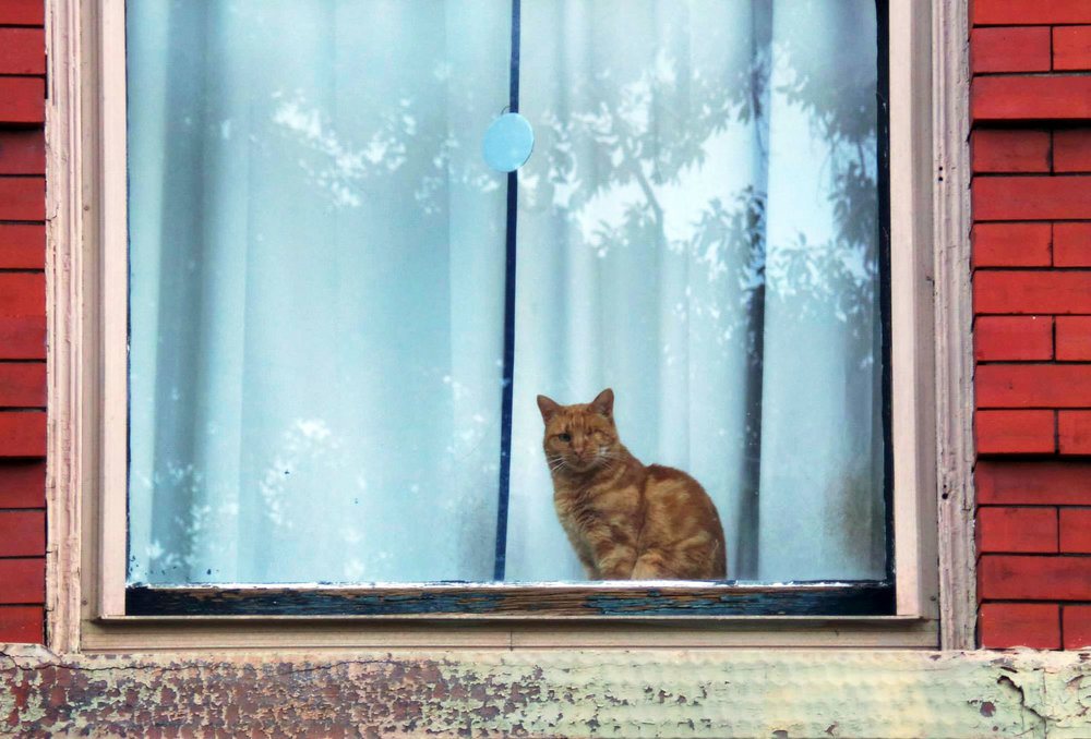 Cat on a Window