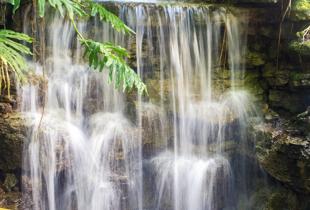 Waterfall at Krohn Conservatory