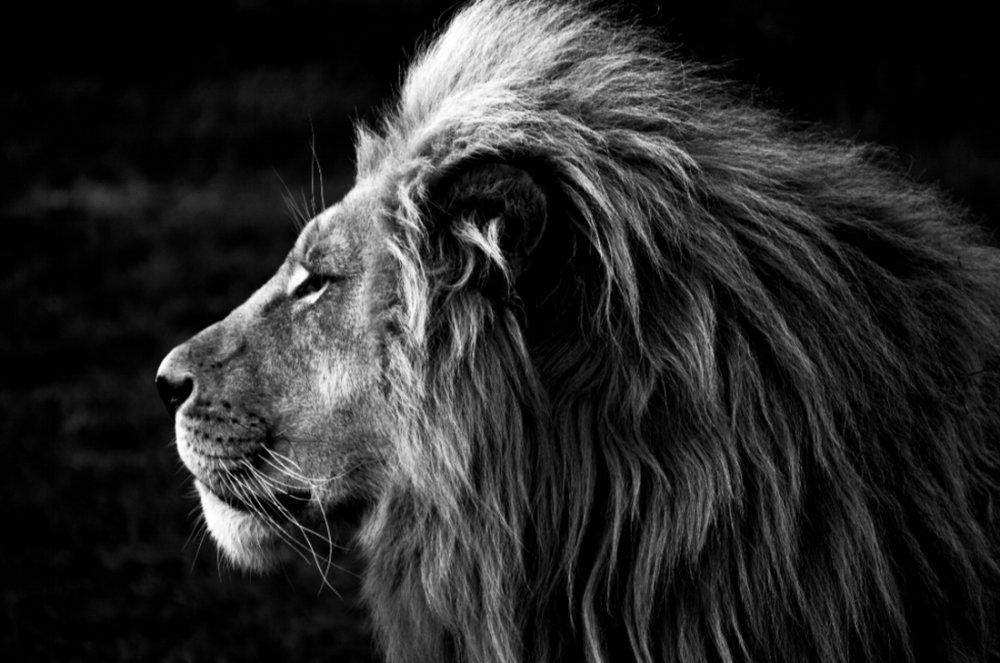 Follow The Pride -