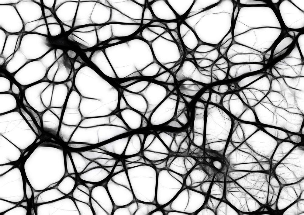 neurons-440660_1920.jpg