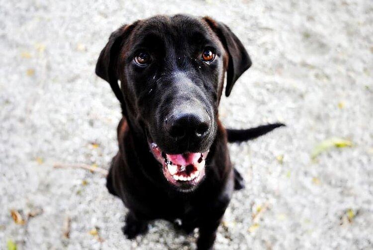Pet Meds Adapted from Human Therapies — Torigen