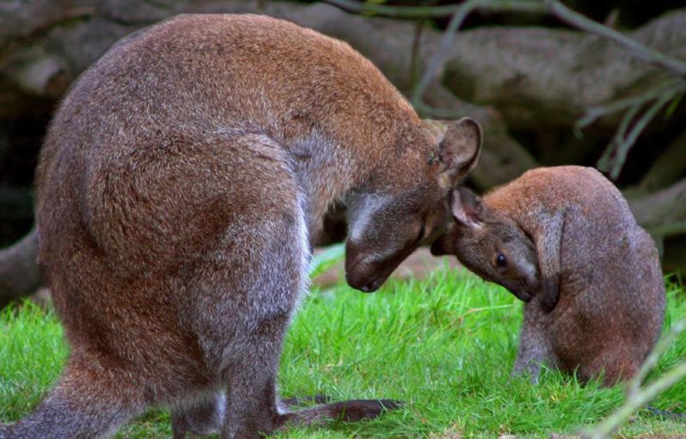 6.Leonardslee_gardens_wildlife.jpg