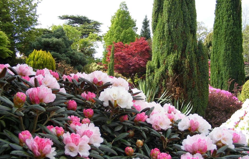 3.Leonardslee_gardens_flowers.jpg