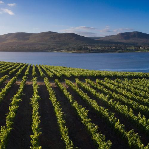 The-vineyards.JPG