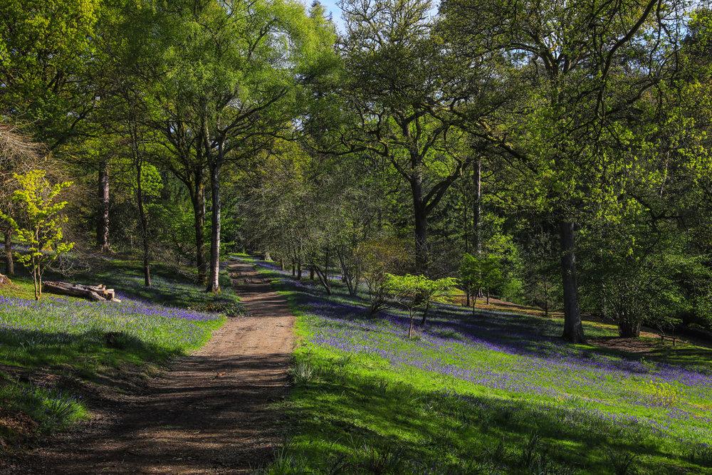 Leonardslee-Gardens01.jpg