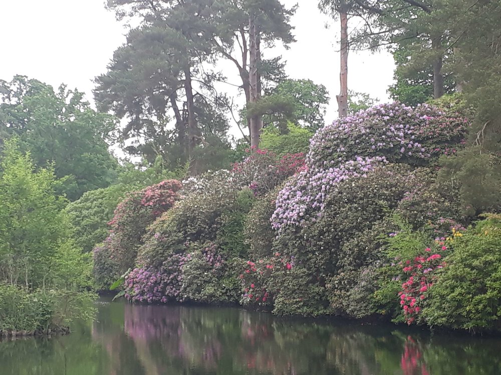 Rhododendron Ponticum over one of the lakes