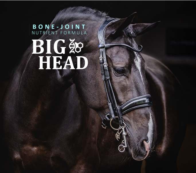big head cure in horses.jpg