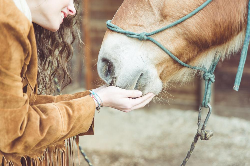 feeding hemp oil to horses
