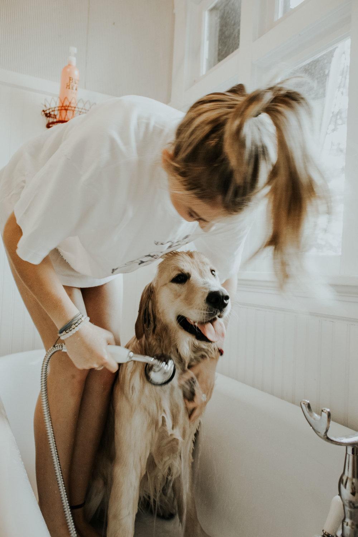 hemp-oil-cures-smelly-dog