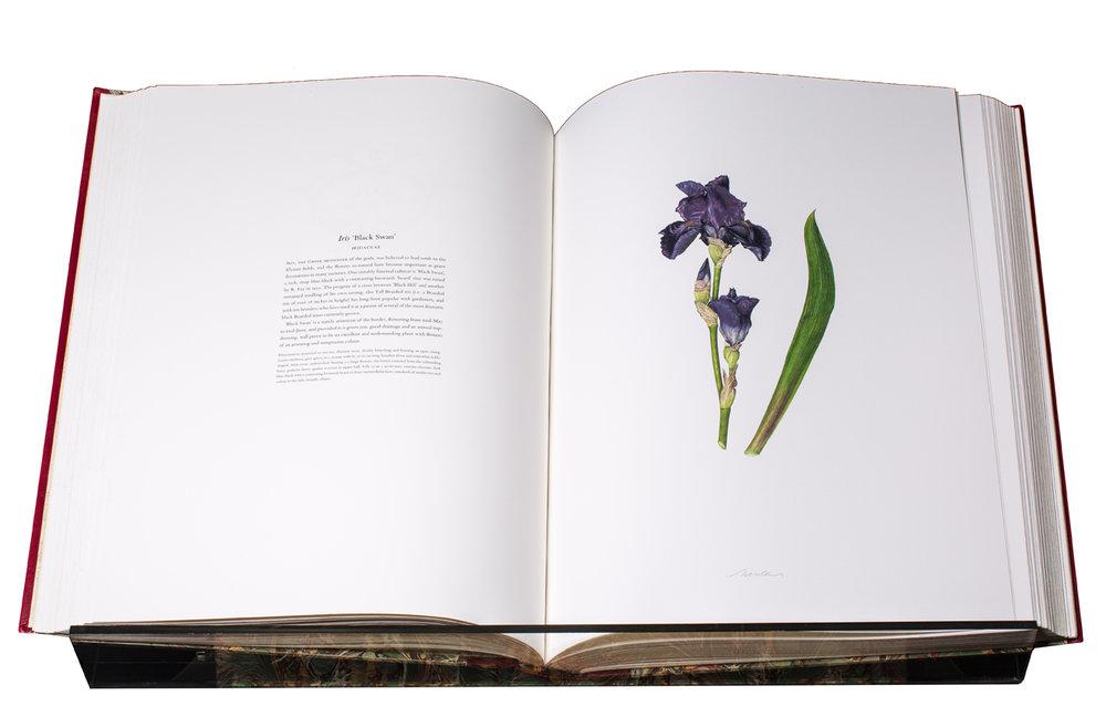 HF Iris, Nessler.jpg