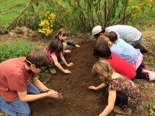 Working with 1st grade students in our Biodynamic Gardens