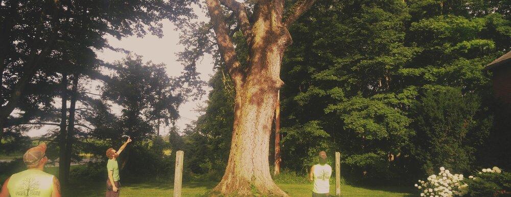 ARBORIST: - TREE SURGEON