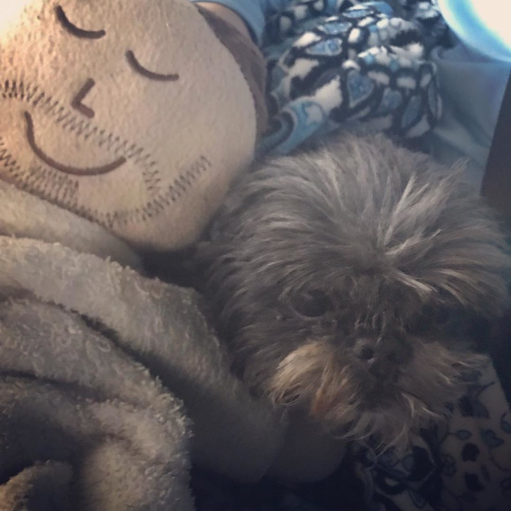 Passing of Pet - Lilo, a beloved family pet and  lifelong companion to a 10 year-old boy named Christian , crossed over this morning. The Vet sent this 13-year-old  Shih-Tzu home for final moments of quiet time. His mom shared this photo with us;  Christian had tucked his Jesus pillow next to Lilo for comfort.