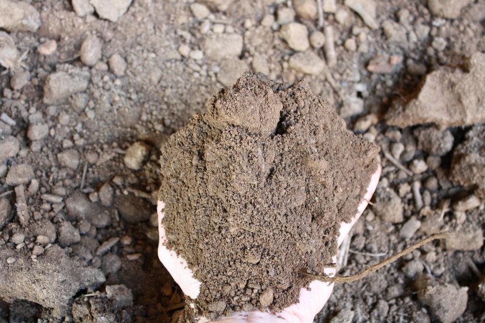 Regular Topsoil w hand.JPG
