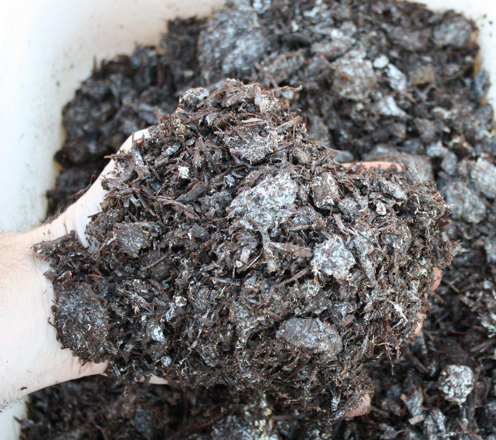 Fresh Mushroom Soil
