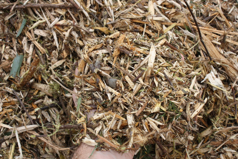 Reg wood chips w hand.JPG