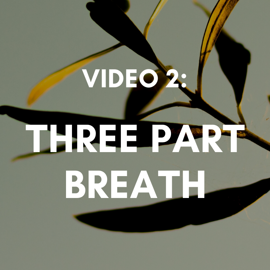 Video 2: Deep Belly Breathing