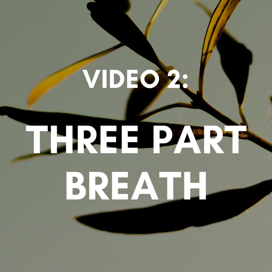 Video 2: Deep Belly Breathing