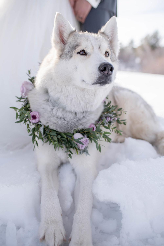 winter wedding dresses and flowers.jpg