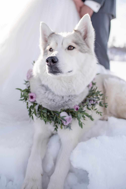 winter wedding dresses.jpg
