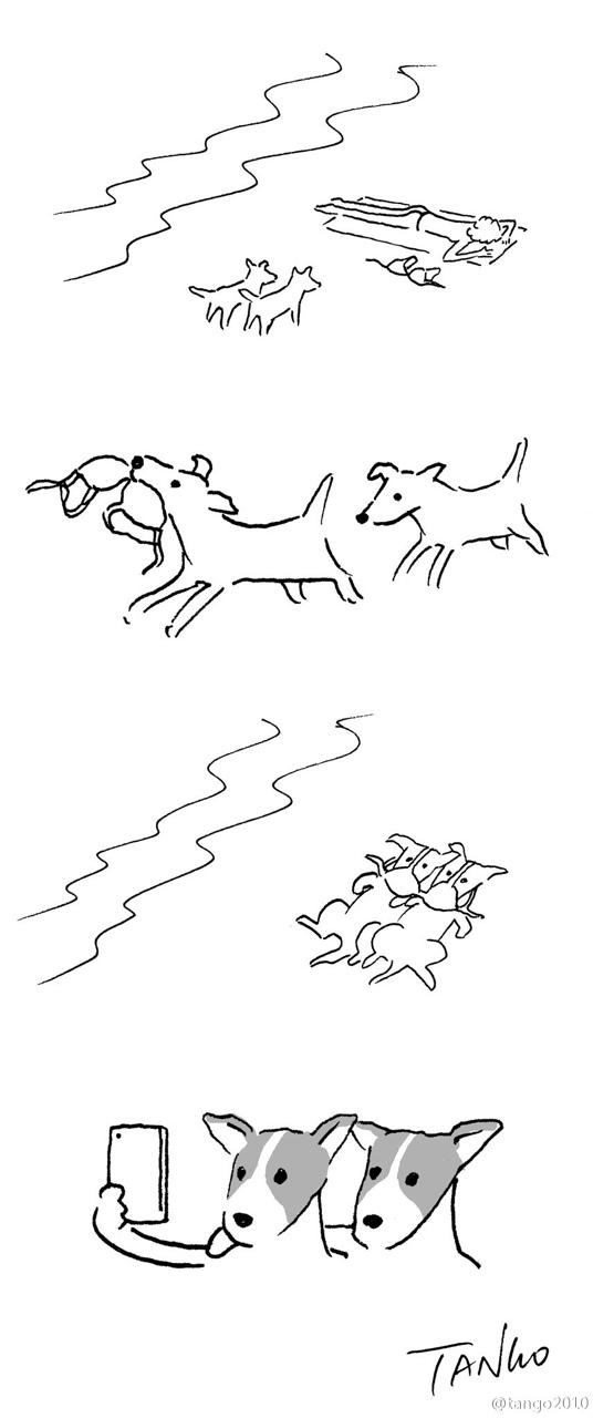 9-hilarious-animal-tanning.jpg