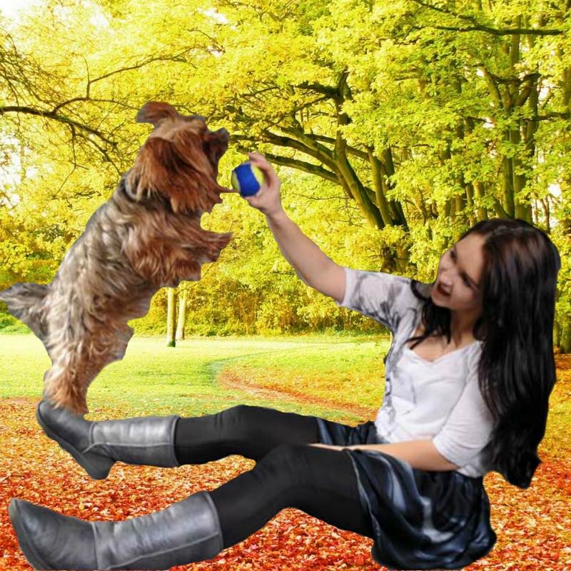 sign up for the best training at The Well-Mannered Dog