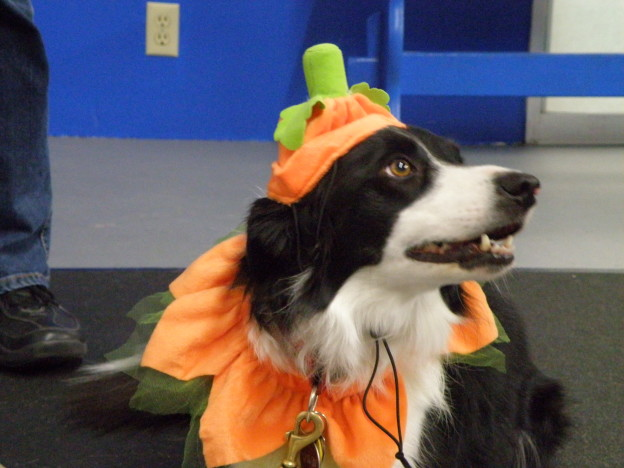 Preparing your dog for Halloween