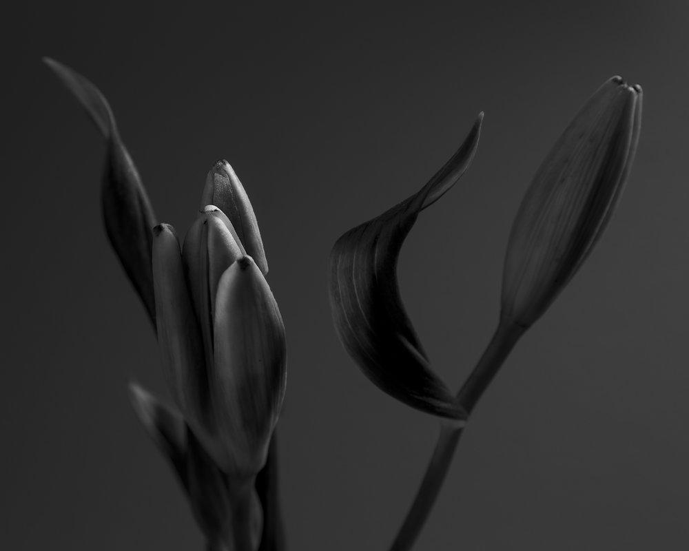 160613_W5A1_MapplethorpEmulation_Flowers_8309.jpg