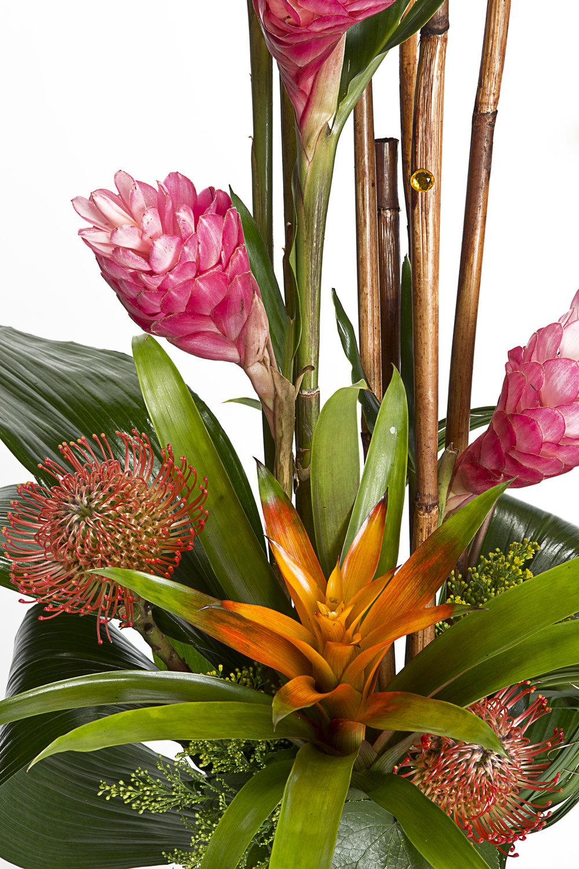 11-12-14_Bloompop_Melrose_0101.jpg