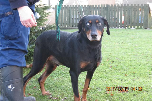 Merlin (Doberman, about 6 years old)