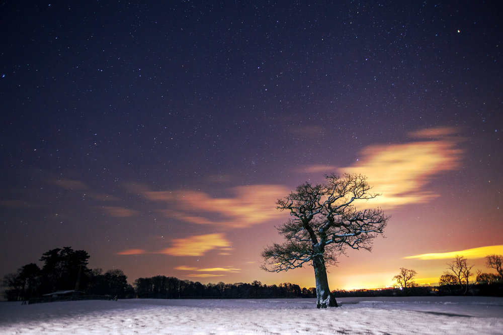saddington snow tree.jpg